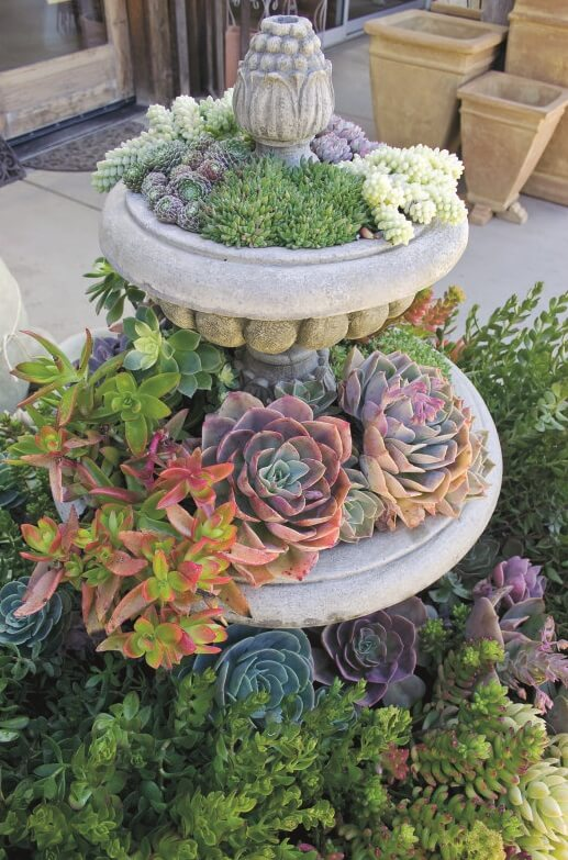 Best Front Yard Landscaping Ideas Go Stack The Succulents - Harptimes.com